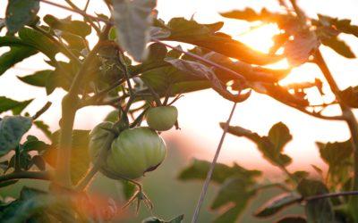 Alimentation durable – innovation sociale et ESS